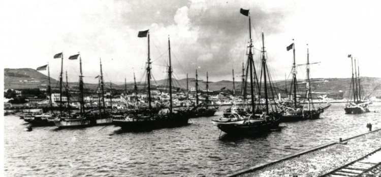 American Whaling Ships 1900, in Horta Harbour
